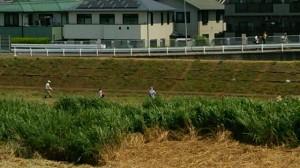 平成26年7月26日(土)酒匂川除草作業